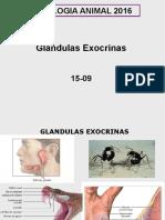 Exocrinas