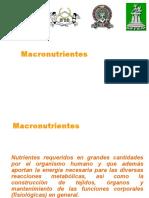 MACRONUTRIENTES.pptx