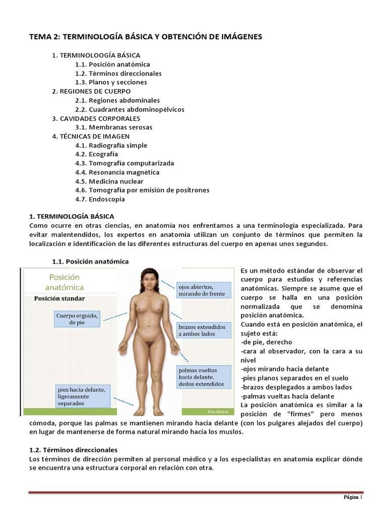 Fantástico Anatomía Actividad Términos Direccionales Embellecimiento ...