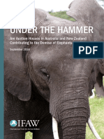 IFAW Under the Hammer