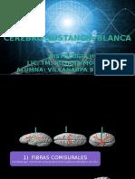 histologia.pptx