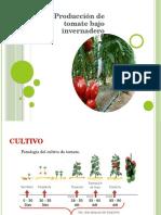 Nutriciòn y Riego Tomate