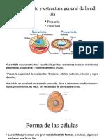 exposicion celula