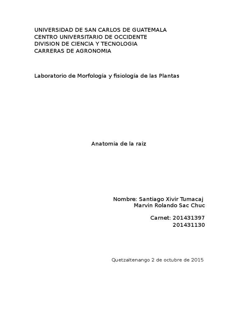 imforme de lab anatomia de la raiz.docx