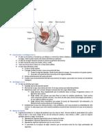 Anatomía y malformaciones 2.docx