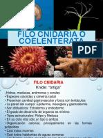 3. Cnidaria