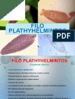 4. B Filo Plathyhelminthes Polo