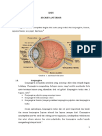 Anatomi Segmen Anterior Mata Buat Penglihatan