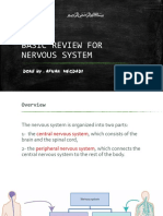 Basic Review for Nervous System