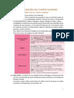 U.D.1. ORGANIZACIÓN DEL CUERPO HUMANO.pdf