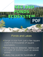 Lakes and Ponds Ecosystem