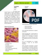 14. Bacilos gram negativo y bacterias especiales.pdf