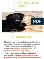 CATS & DOGS Nutrition.pdf