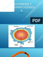 Presentacion Ovogénesis y Espermatogénesis