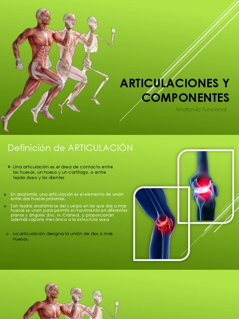 Articulaciones y Componentes Anatomia
