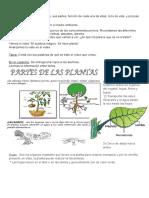 Diversidad de Plantas