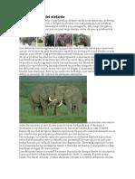 Crianza de Elefantes