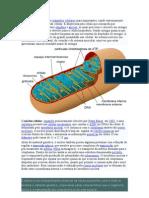 A mitocôndria é um dos organelos celulares mais importantes