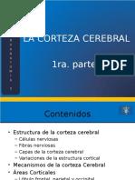 03_La_Corteza_Cerebral_Parte_1.pptx