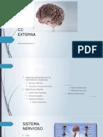Configuración  Cerebral.pptx