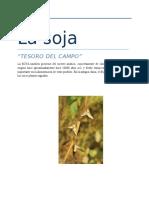 DIAGNOSTICO MUNDIAL DEL SECTOR DE CEREALES- SOJA.docx