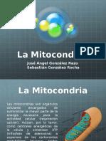 Mitocondria