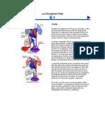 La Circulación Fetalal