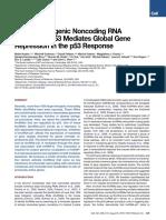 A Large Intergenic Noncoding RNA