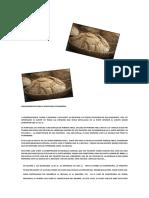 ASESORAMIENTO PARA LA APERTURA DE PANADERIA (3).pdf