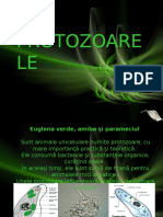 Protozoare