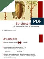 Etnobotánica Cacao