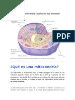 Qué Es La Mitocondria y Cuáles Son Sus Funciones