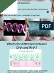 GenAndMed_4_DNA.pptx