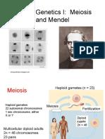 Mendel HuGenetics