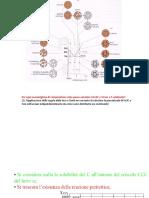 esercitazione Fe-C.pdf
