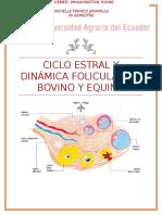 Ciclo Estral y Dinámica Folicular de Bovino y Equino