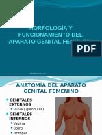 morfologayfuncionamientodelaparatogenitalfemenino-1