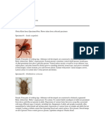 collected specimens with potential vectors identified