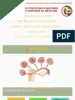 EMBRIOLOGIA SEGMENTACIÓN