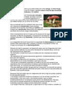 Fungi Es Un Término Latino Que Puede Traducirse Como Hongo