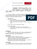 arterias.pdf