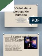 Procesos-de-la-percepción-humana 2.pptx