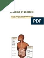 Sistema Digestório[141904].pdf