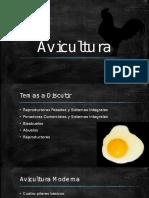 Avicultura  PPT