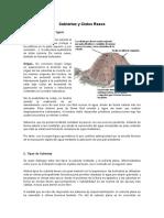 CIELO FALSO.docx