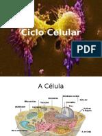 5CicloCelular_20150515150714.pptx