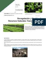 Desarrollo Sostenible Caso Deforestacion Haiti