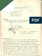 02_rn's lb  i - n mathews - observations of the zig zag heron