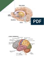 Sistema Nervoso Central