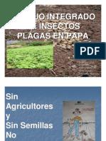 Insectos Plaga (Omar Mendoza)
